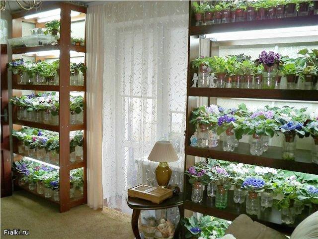 Подсветка для цветов в квартире