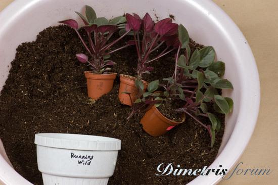 Как сформировать фиалку чтобы цветы были в центре, букет 33 розы цена