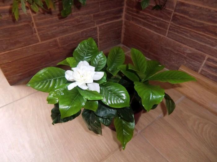 знакомства и хвасты комнатными растениями