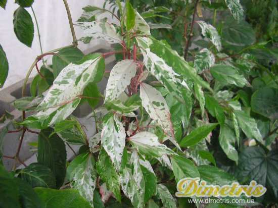 как избавить растение от вредителей комнатных растений